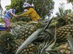 Ngành giao thông ưu tiên cao nhất cho lưu thông tiêu thụ nông sản