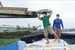 Giá phân bón tăng cao khiếnnông dân Long An gặp khó