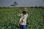 Mê Linh phấn đấu về đích huyện nông thôn mới vào cuối năm 2021