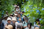 Việt Nam đứng đầu tăng trưởng khách du lịch tới Nhật Bản