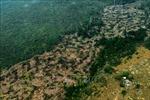Brazil gồng mình cứu rừng Amazon