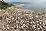 Cá chết hàng loạt ở hồ Koroneia của Hy Lạp