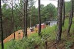 Buộc tháo dỡ toàn bộ công trình 'mọc' trái phép trong rừng thông tại Đà Lạt