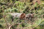 Mật phục bắt quả tang vụ phá rừng để lấn chiếm 1.250 m2 đất