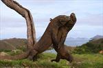 Indonesia sẽ tạm đóng cửa đảo rồng Komodo