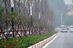 Tiêu chí '3Đ' cho cây xanh Hà Nội
