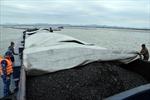 Cảnh sát biển tạm giữ 700 m3 than không rõ nguồn gốc