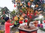Hoa cảnh, cây trái 'độc, lạ' giá 70-100 triệu đồng vẫn hút người mua chơi Tết