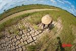 Người dân Đồng bằng sông Cửu Long gồng mình chống hạn, mặn khốc liệt