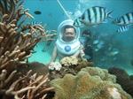 Đi bộ dưới đáy biển ngắm san hô và cá ở Phú Quốc