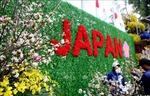 Hà Nội bàn cách thuần dưỡng hoa anh đào Nhật Bản