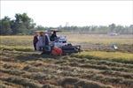 An Giang chuyển hơn 2.000 ha lúa kém hiệu quả sang trồng hoa màu
