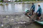 Đồng bằng sông Cửu Long thích ứng với biến đổi khí hậu - Bài 4: Hiệu quả chưa đồng bộ