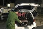 Xe taxi chở trái phép một con gấu trọng lượng trên 100kg