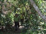 Phú Yên tái sinh rừng ở các tiểu khu từng bị tàn phá