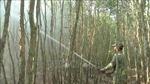 Phòng cháy, chữa cháy rừng - Bài cuối: Dự báo sớm nguy cơ để ứng phó kịp thời