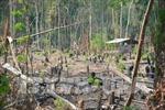 Gia Lai: Kiểm điểm các tập thể, cá nhân để mất hàng nghìn ha rừng