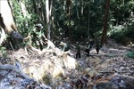 Áp lực giữ rừng ở Tây Nguyên - Bài 2: Dễ đóng cửa, 'khó cài then'