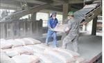 Tạo thế mạnh trong sản xuất xi măng - Bài cuối: Coi trọng yếu tố bảo vệ môi trường