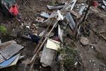 Bão Amanda hoành hành, ít nhất 14 người thiệt mạng tại El Salvador, Guatemala