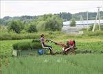Những nông dân Việt Nam trồng rau trên đất Nga