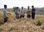 Kiên Giang chủ động ứng phó với hạn mặn mùa khô