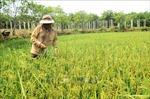 Gia Lai: Ứng dụng nhiều biện pháp phục hồi đất nông nghiệp