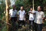 Thực hiện tốt công tác tuần tra bảo vệ rừng trong mùa khô