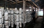 OCOP tạo 'vị thế'mới cho nông sản Tuyên Quang