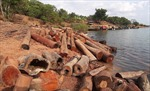 Phát hiện bãi gỗ lậu số lượng lớn dưới lòng hồ thủy điện Sê San 4