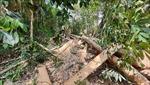 Phó Thủ tướng yêu cầu xử lý vụ việc phá rừng tại Mang Yang, Gia Lai do báo Tin tức phản ánh