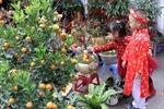 Chợ hoa Tết phố cổ Hà Nội họp 1 lần trong năm