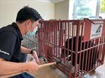 Cứu hộ gấu ngựa non từ tỉnh Điện Biên