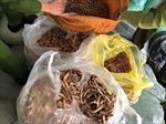 Thu giữ gần 1 tấn nguyên liệu thuốc Bắc không rõ nguồn gốc