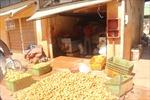 Điểm danh 17 cơ sở bán nông sản Trung Quốc tại Đà Lạt