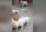 'Tan chảy' hình ảnh chó hoang dành thức ăn cho mẹ