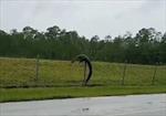 Cá sấu trèo rào vào căn cứ quân sự Mỹ