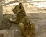 Hình ảnh những chú sư tử gầy trơ xương tại Sudan