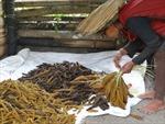Biến đổi khí hậu khiến nông dân Ấn Độ chuyền sang trồng kê