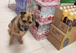 Chú chó quanh quẩn trong bệnh viện 3 tháng đợi chủ đã mất vì COVID-19