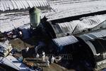 Hàn Quốc tiêu hủy gần 22 triệu con gia cầm do lo ngại dịch cúm