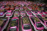 Ế ẩm vì COVID-19, taxi bỏ không biến thành vườn rau ở Thái Lan
