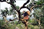 """Các địa phương chăm lo bảo tồn và phát triển các loại cây, con """"đặc sản"""""""