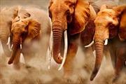Vẻ đẹp và sức mạnh của loài voi