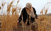 Các nước Arập khủng hoảng lương thực