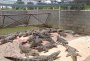 Phát hiện hàng ngàn động vật quý hiếm trong dân