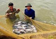 Nông dân Nghệ An trúng lớn vụ cá bán vào dịp Tết