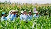 Gần 100 tỉ USD thu được nhờ ứng dụng cây trồng biến đổi gen trên toàn cầu