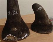 Thu giữ 5kg sừng tê giác tại sân Tân Sơn Nhất