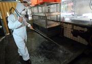 Trung Quốc công bố đặc trưng mang tính quy luật của H7N9